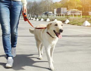 7 Health Benefits of Owning Pets Dog Walking