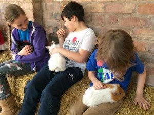 7 Health Benefits of Owning Pets Kids & Rabbits