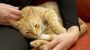 7 Health Benefits of Owning Pets Stroking a Cat