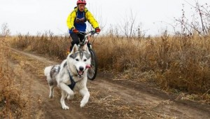 pros-and-cons-of-cycling-with-your-dog-keeping-pace