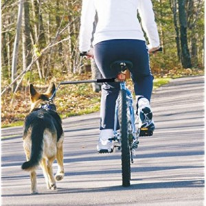 pros-and-cons-of-cycling-with-your-dog-tow-leash