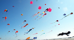 Guinness World Records For Kite Flying Number