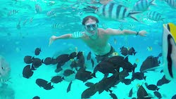 Snorkelling Fish